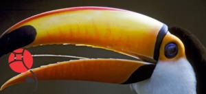 toucan-long